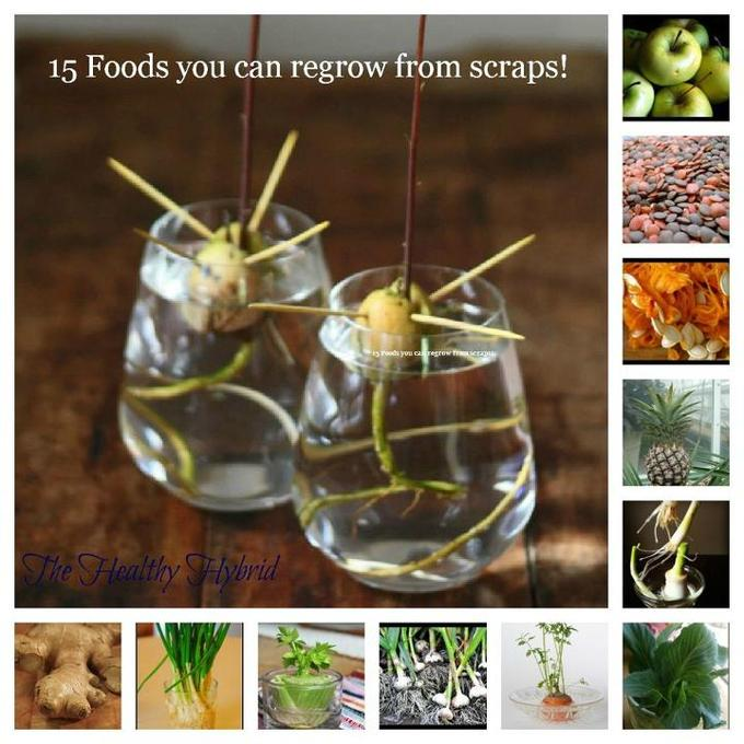 16 Foods That Will Re Grow From Kitchen Scraps: 16 Foods That'll Re-Grow From Kitchen Scraps